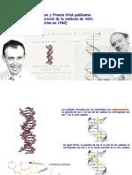 genetica-clonacion