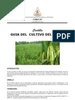 file31_Cartilla_Arroz