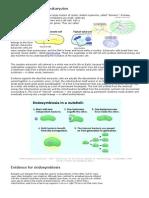 4-Article En Do Symbiosis Prokaryotes to E