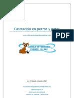 Castracion perros y gatos[1]