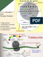 Bioq Clase Proteínas 2006