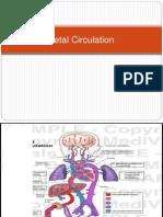 4. Fetal Circulation