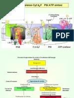 5) Fotosintesi II- Schema Z