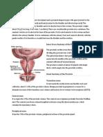 Anatomy Prostate