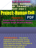 Human Cell (Hsp)