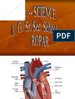 Working and Structure of Heart