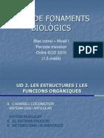 Bloc comú I-Fonaments Biològics-UD2 II(sistema ossi)
