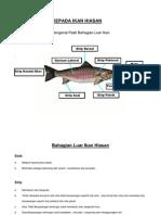 ikan hiasan (2)