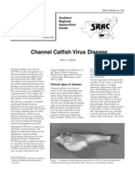 Channel Catfish Virus Disease