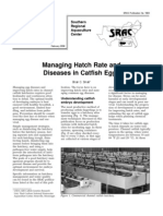Managing Hatch Rate and Diseases in Catfish Eggs