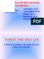 Forest&Wild Life
