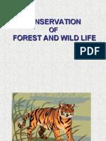 Wild Life Ntc