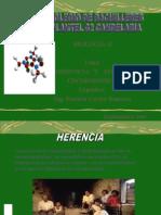 genetica-teoriacromosmica-bio2clase2011b