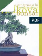 Bonsai. La Zelkova