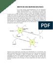 Funcionamiento de Una Neurona BiolÓgica