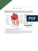 Cardio Physiology Full