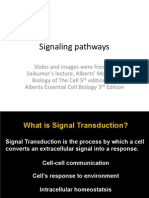 Signaling Pathways