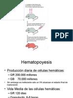 Bases Moleculares Hematopoyesis