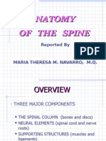 Anatomy of the Spine and Some Common Pathologies