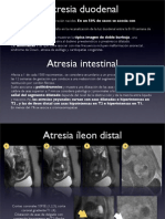 Abdomen Rm Fetal