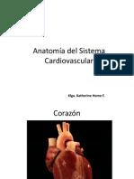 Anatoma Del Sistema Cardiovascular Parte 1
