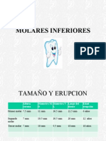 molaresinferiores-090512125515-phpapp01