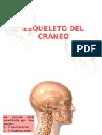 2.HUESOS DEL CRÁNEO