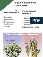 micosis-pulmonares2010