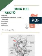 Anatomia Del Recto
