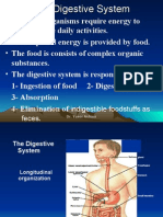 The Digestive System for Dentest