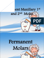 (Oral Ana) Max 1st and 2nd Molars