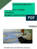 Fatima CuidadosDelGato Www[1].Diapositivas