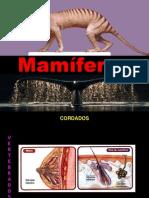 13 Mamíferos