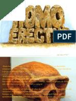 Presentacion Homo Erectus