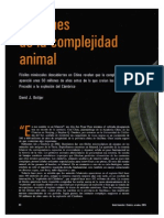 Orígenes de la complejidad animal - David J. Bottjer