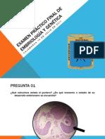 EXAMEN PRÁCTICO FINAL DE EMBRIOLOGÍA Y GENÉTICA
