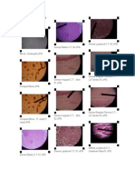 Histology Slides 1st