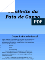 Tendinite Da Pata de Ganso