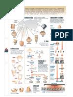 Lamina Infografia Ceramica