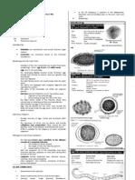 Parasitology-Lec 3 Nematodes 2