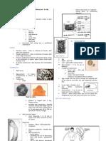 Parasitology-Lec 8 Taenia