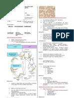 Parasitology-Lec 12 Trypanosomes