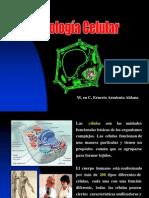 2) Biologia celular