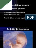 Embriologia - A3