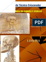 anatomia_cabeza_y_cuello_3