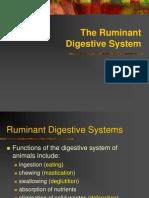 Ruminant Digestive System - Copy