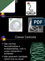 Cestoda