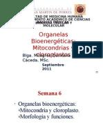 clase mitocondria