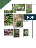 Plantes Gestion Des écosystèmes