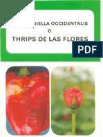 Thrips de Las Flores